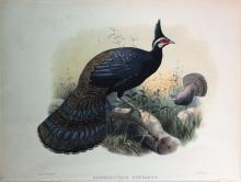Stately Hand-colored Lithographs of Game Birds by Daniel Elliot
