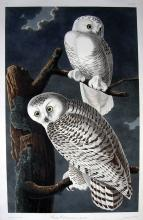 Arader Galleries April 6th Auction
