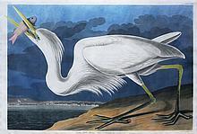 Audubon Aquatint Engraving, Great White Heron