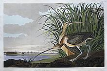 Audubon Aquatint Engraving, Long-Billed Curlew