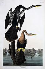 Audubon Aquatint Engraving, Black-Bellied Darter