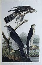 Audubon Aquatint Engraving, Goshawk & Stanley Hawk