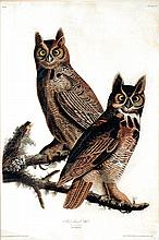 Audubon Aquatint Engraving, Great Horned Owl