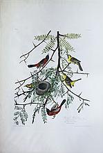Audubon Aquatint Engraving, Orchard Oriole