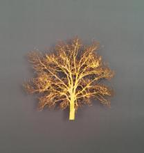 Small Oak 4