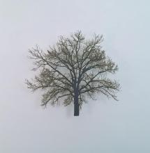 Small Oak 5
