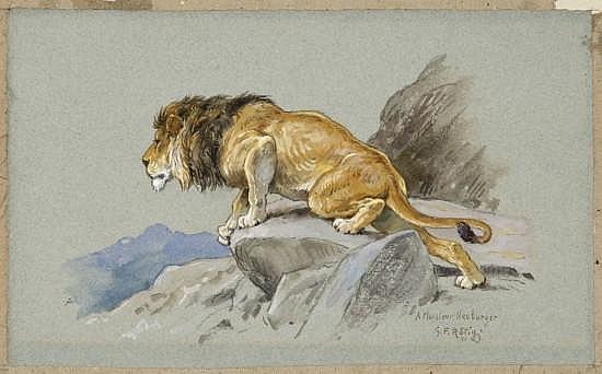 Georges Frédéric Rötig Le Havre, 1873 - (?), 1961 Lion à l'affût Aquarelle gouachée sur trait de crayon sur papier bleu