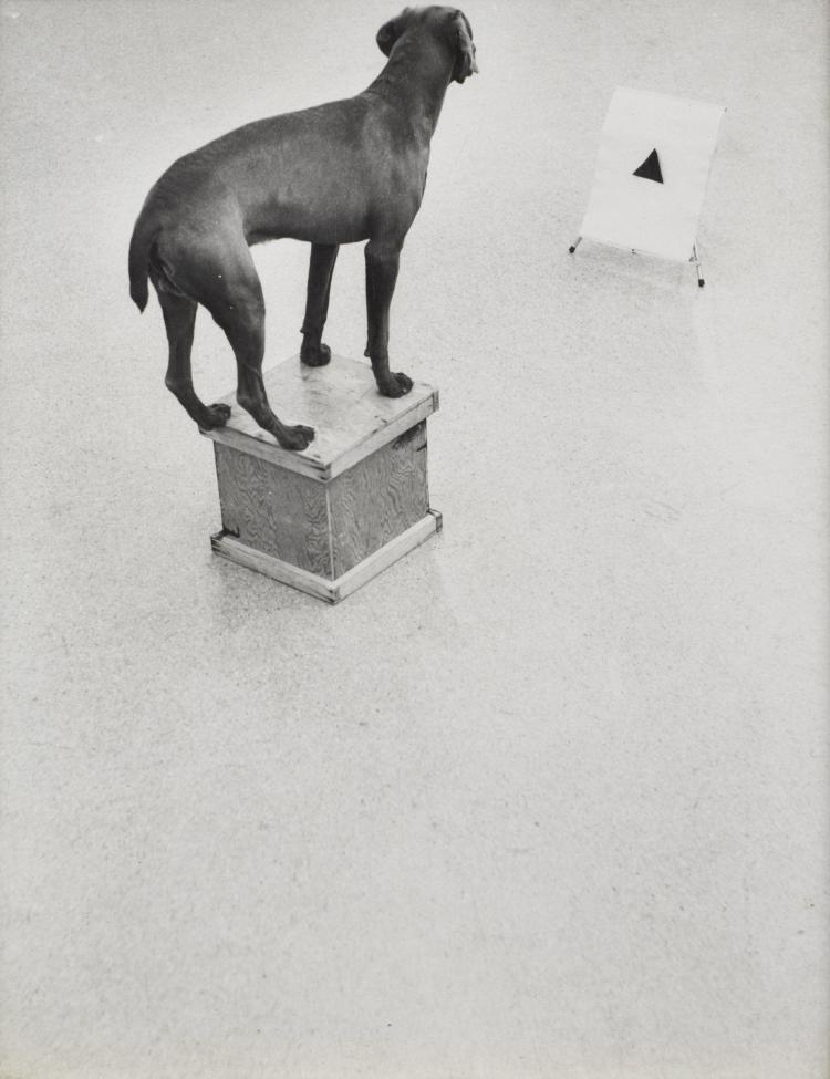 William WEGMAN (Né en 1943) Before / On / After : Permutations - 1972 Sept épreuves argentiques contrecollées sur carton