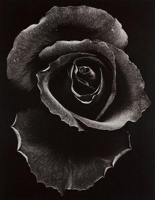 Junichi ONO  Rose - 1971 Épreuve argentique d''époque sur papier Agfa