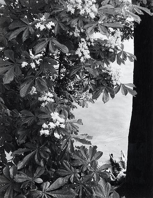Willy RONIS (1910 - 2009) Quai des Tuileries - Paris, avril 1953 Epreuve argentique tirée en 1989 par Willy Ronis