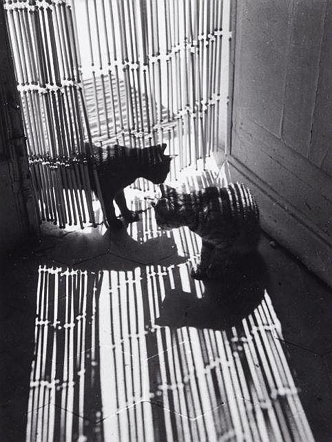 Willy RONIS (1910 - 2009) Les chats de Willy Quatre (4) épreuves argentiques (c. 1990)