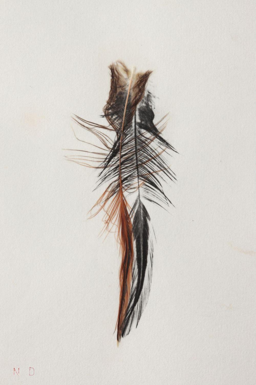Noël Dolla (né en 1945) La plume et son ombre, 2010 Dessin su papier japon