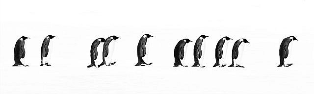David YARROW (Né en 1966) THE LONG MARCH, SNOW HILL ANTARTICA, 2010 Tirage pigmentaire