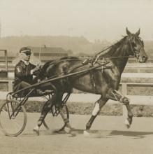 Silver Photo Hope Horse Show, Hambleton, 1918