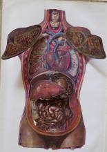 Rare ANNA FISCHER Anatomy Multi-layered , Paris 1900's