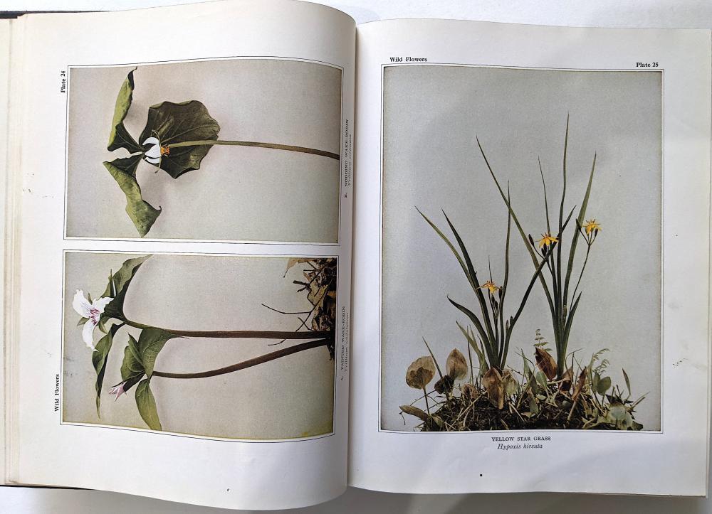 Antique Vintage Rare Book Wild Flowers, 1936