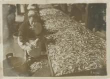 Rare M. ROL Paris Sardines Market, 1913