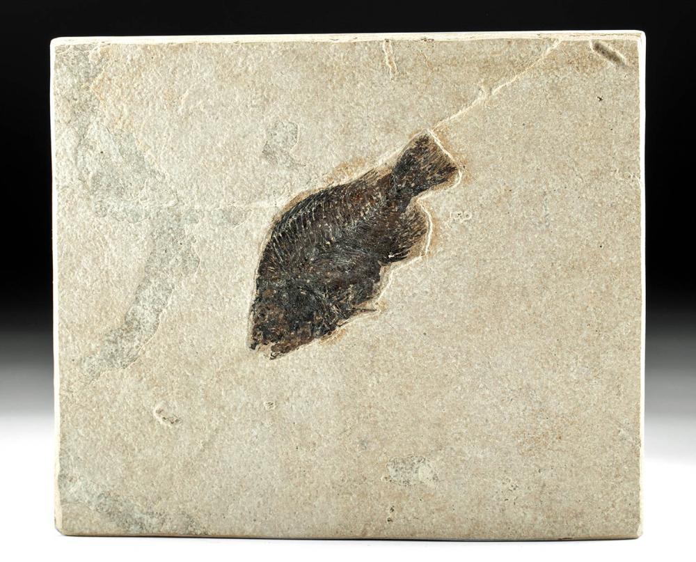 Fossilized Priscacara Fish in Sandstone Matrix