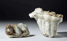 Lot of 2 Fossilized Mastodon Teeth