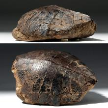 Ancient Fossilized Turtle Shell