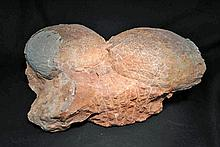 Pre-Historic Dinosaur Eggs (Doublet)