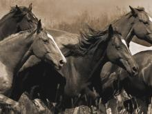 Middle of the Pack by Robert Dawson