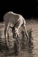 Cool Water by Robert Dawson