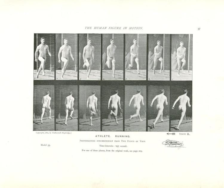 essay on eadweard muybridge They include critically acclaimed essays on edward weston and eadweard muybridge as well as appraisals of contemporary photographers includes: eadweard muybridge, fragments of a tesseract p22-32.