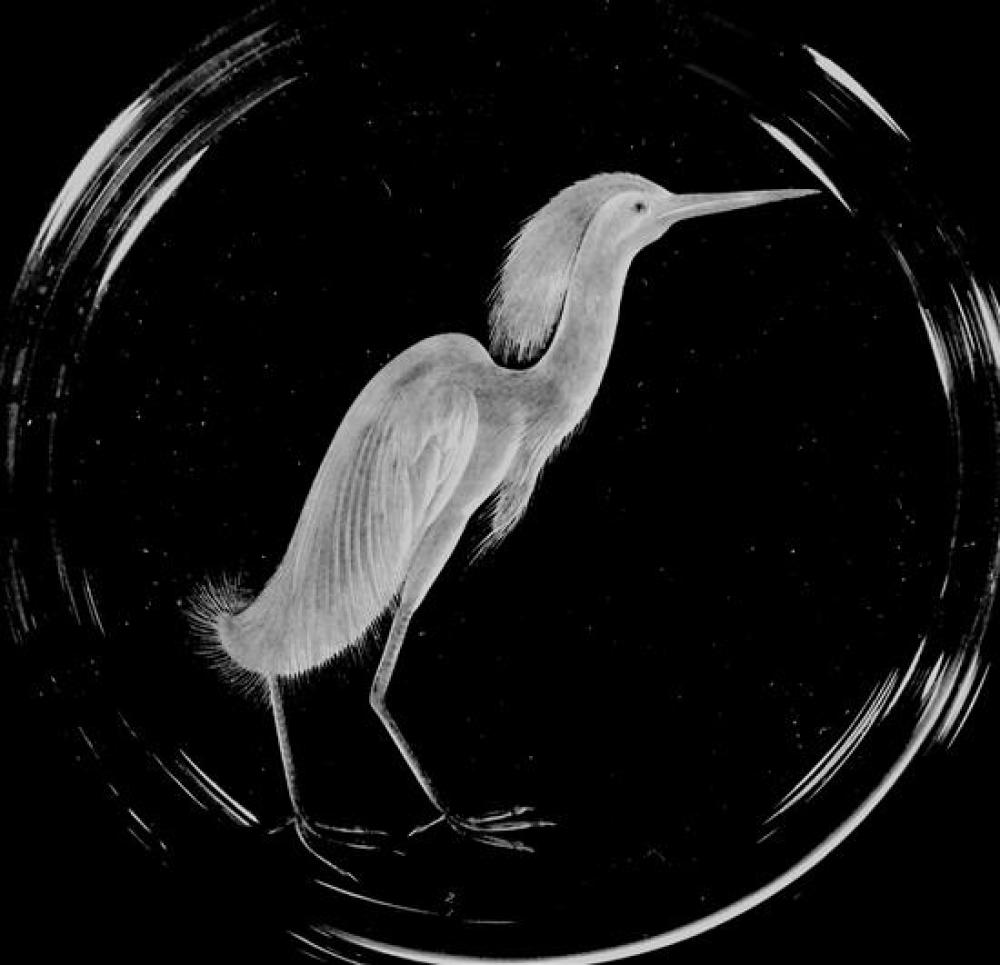 GLASS: Nine Steuben engraved glass Audubon plates, decorated with various birds, all signed, all with wear consistent with age and u...