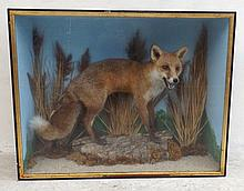 Taxidermy: a fox in a naturalistic setting with