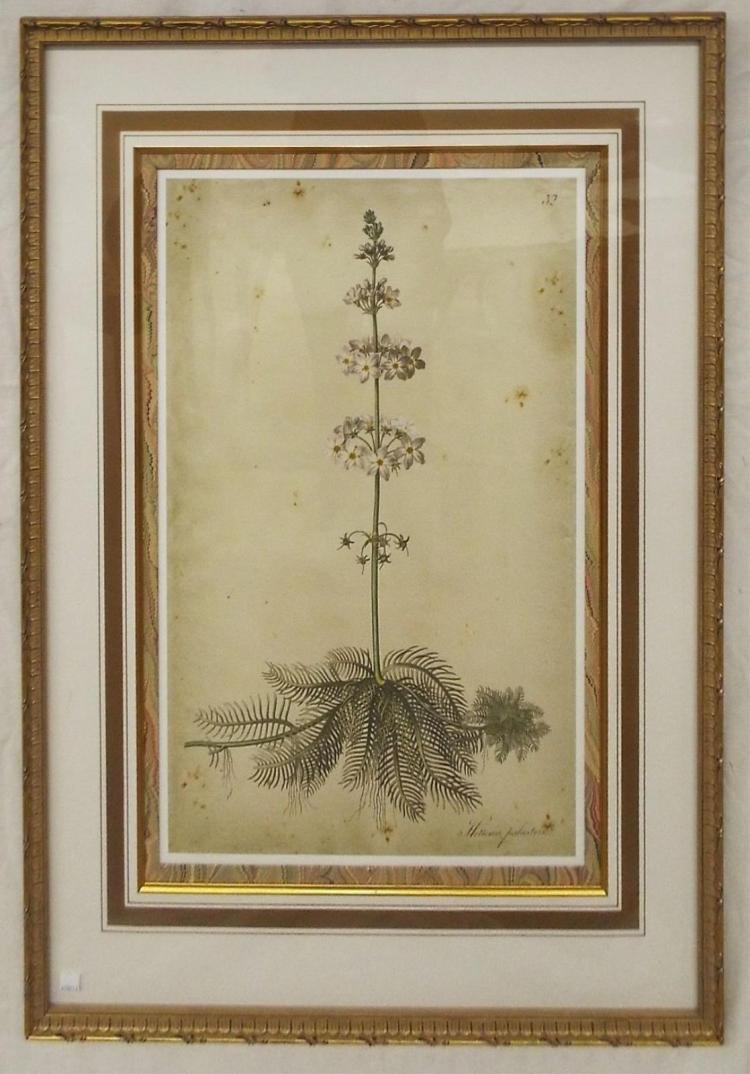 Framed Print, Hottonia Palustris