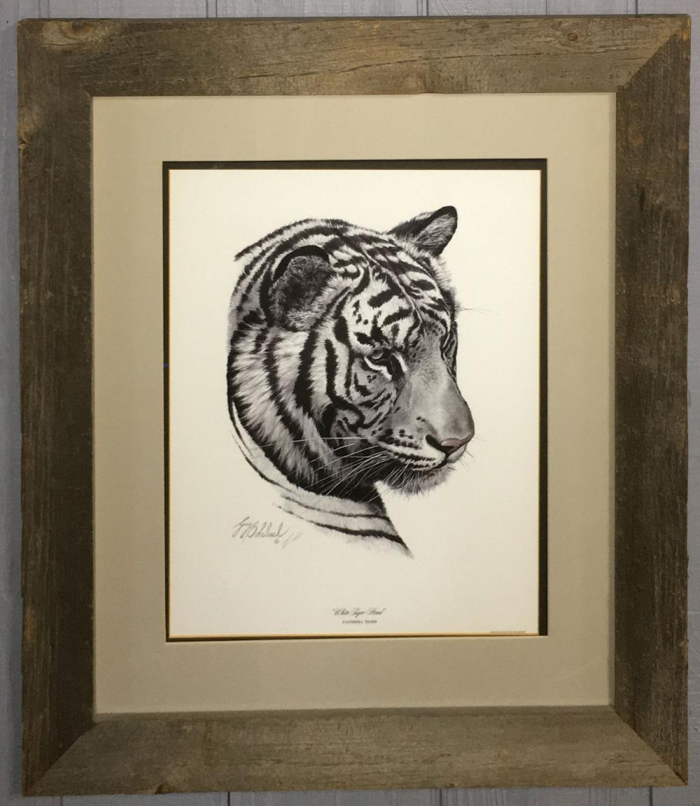 Guy Coheleach Print, White Tiger Head