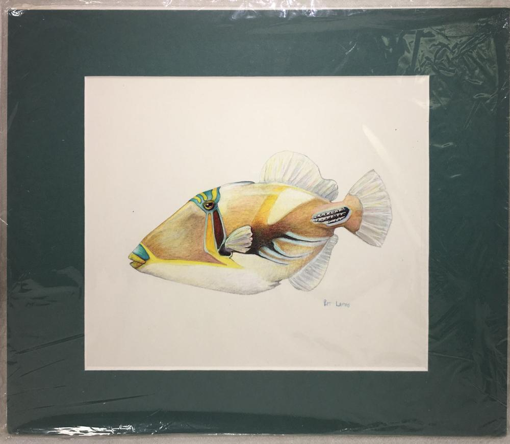 Signed Color Drawing Of Fish, Pat Latas