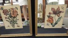 Pair of 19th Century Botanical Engravings