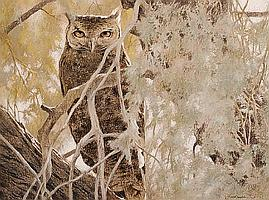 Kim Donaldson (South African, born 1952) Eagle owl in an acacia tree