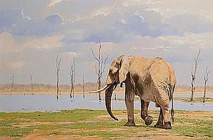 Kim Donaldson (South African, born 1952) Bull Elephant, Kariba, Zimbabwe