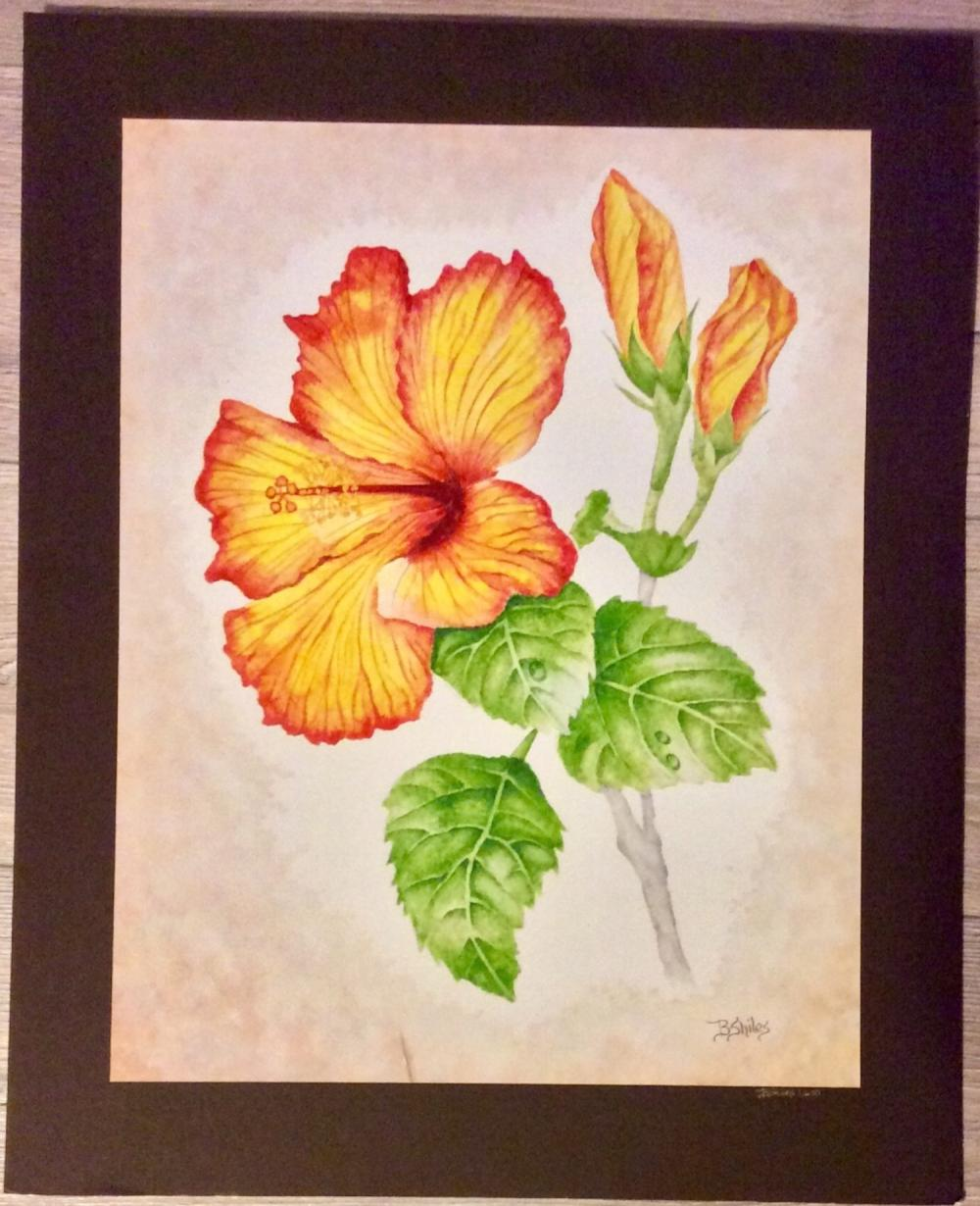"Signed Limited Edition Print ""SALLY'S HIBISCUS"" Printed Art Paper & Laid Down To Larger Art Board 16""X12 1/2"" excluding margins"