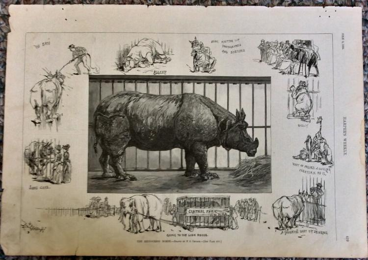 ANTIQUE 1886 Harper's Weekly Full Page Illustration Of Animal Wonders Of New York City's Central Park Zoo