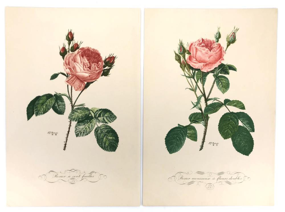 """SET OF 4 PIERRE JOSEPH REDOUTE """"ROSES"""" ETCHINGS"""