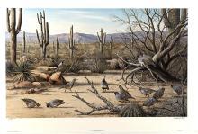 "MAYNARD REECE ""SONORAN DESERT - GAMBEL'S QUAIL"" LTD. ED. PRINT"