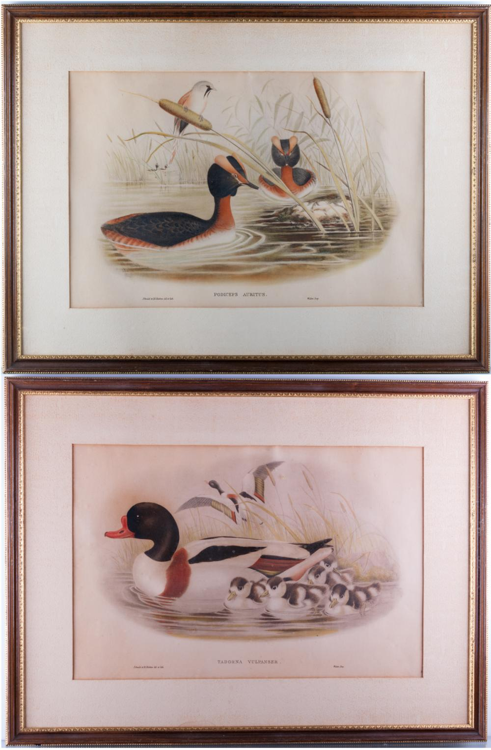 John Gould Ornithological Print Pair
