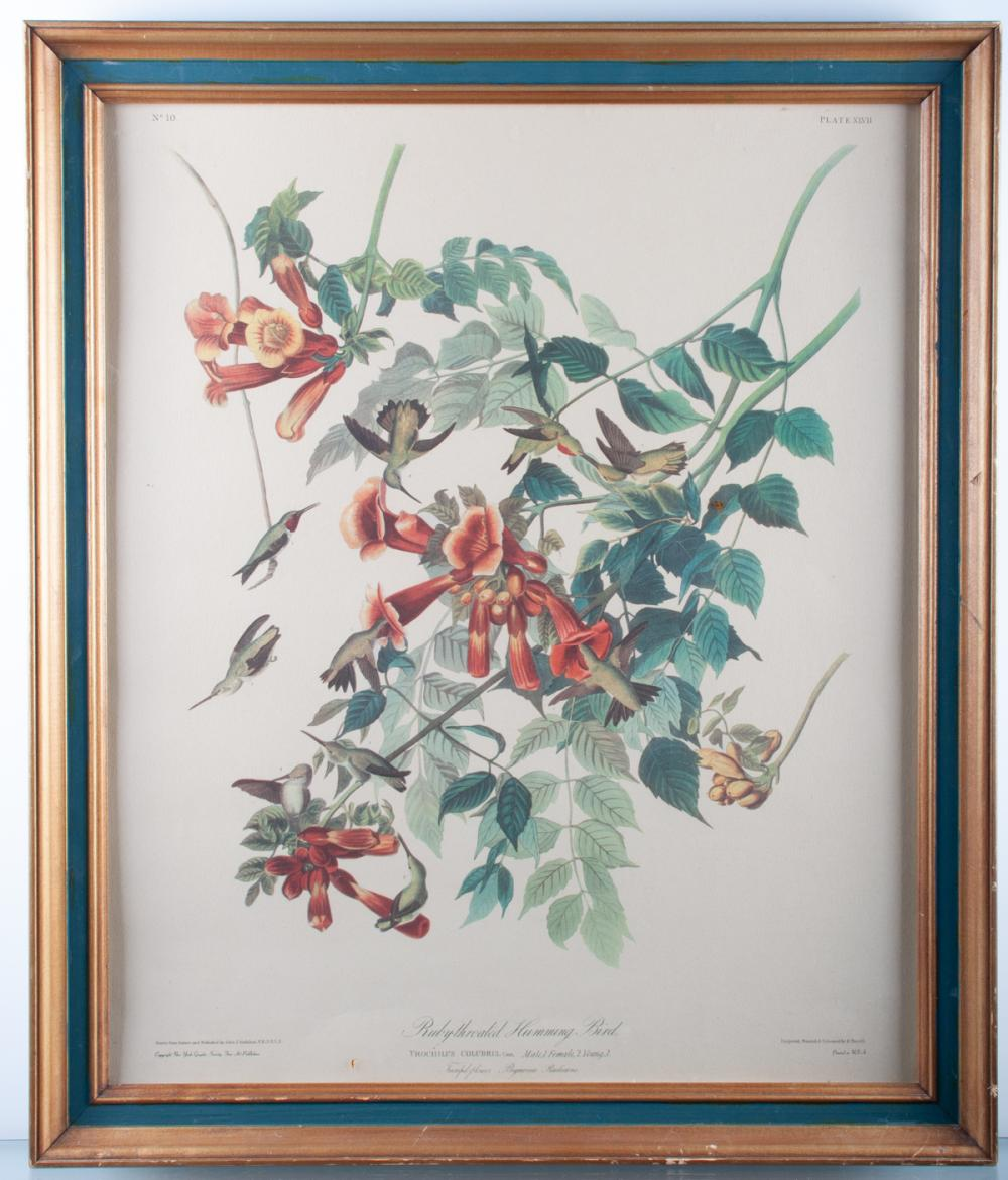 Audubon Ruby-Throated Humming Bird Print