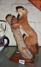 Taxidermy: Squirrel on branch