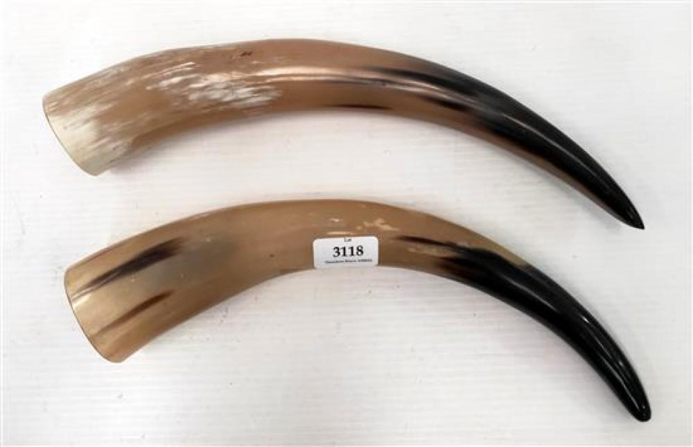 Two polished horns