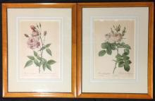 After Pierre Redoute Rosier Rapa + Rosier Damascena Coccinea + Rosa Bifera Officinalis + Rosa Indica Vulgaris (4) Reproduction prints