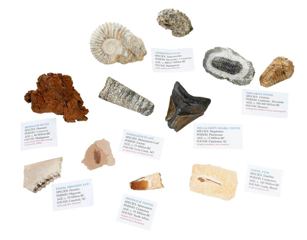 Group of Fossils