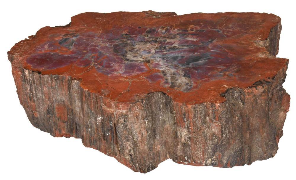 111 Pound Petrified Wood Specimen