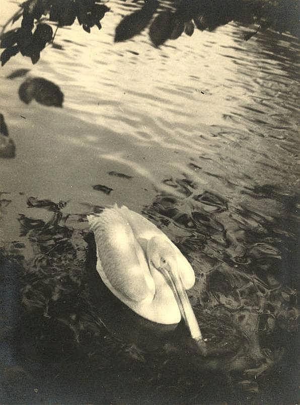 Prange, J.M. (1904-1972). Lot of 38 photographs, a