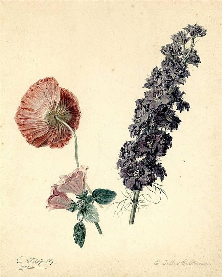 Eelkema, E.J. (1788-1839). (Flowering peony, lavat