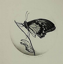 Stolwijk, D. (1931-2013). Insects. Amst., Minotaur